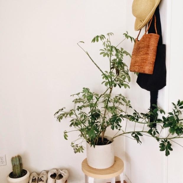 bohemian minimal home